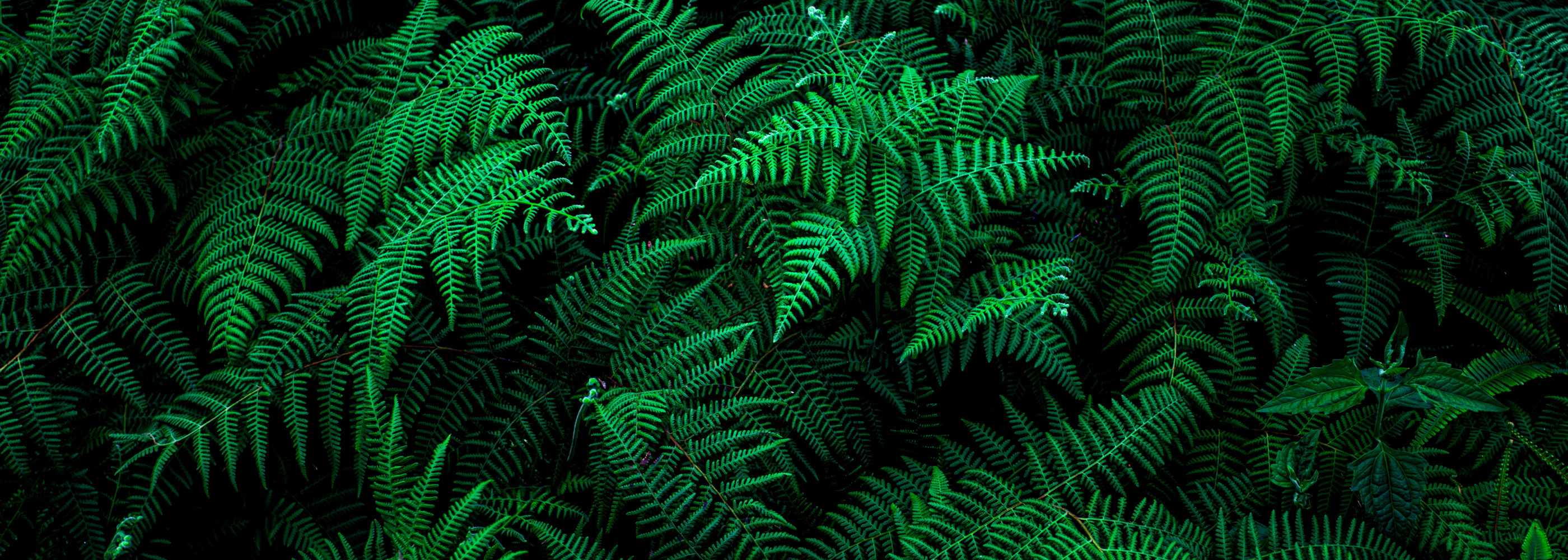 abstract green fern leaf fractal texture, nature background, tropical leaf